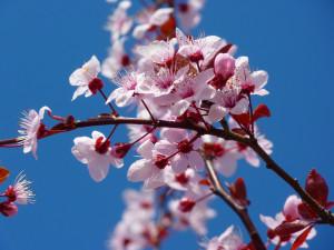 fleurs-printemps-abeilles-1024x768